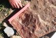 Yacimiento fósiles Álora
