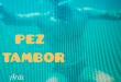 Pez Tambor, Oxigenarte